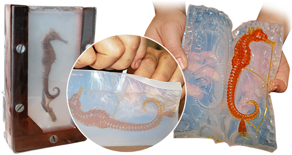 SORTA-Clear™ Series, Water Translucent Silicone Rubber