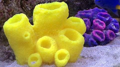 Reproducing a Sea Sponge using Liquid Plastic